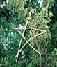 Pentagram in tree at Coldrum