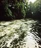 bubbles below waterfall in River Darwen